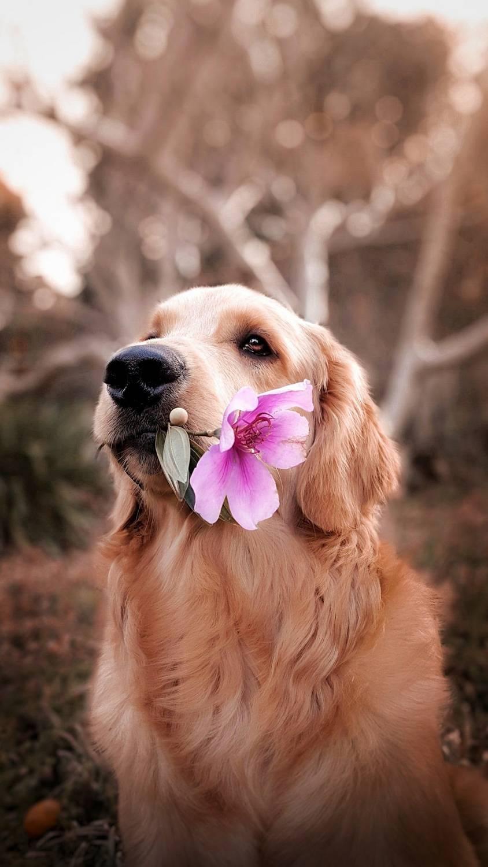 Kremacja psa - jak wygląda i co warto o niej wiedzieć?